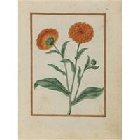 pot marigolds by jacques le moyne (de morgues)