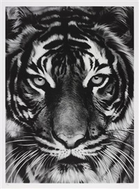 tiger by robert longo