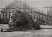 lion en cage by thomas james dixon