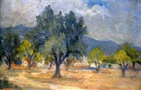 olive grove by stelios miliadis