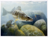 walleye - shallow rock reef by larry tople