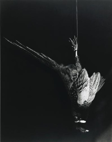 pheasant by robert mapplethorpe