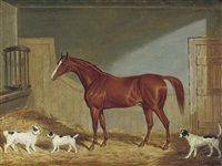 a chestnut hunter, two terriers and a hound in a stable by james (of bath) loder