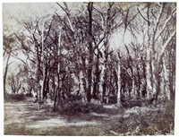 arbres (study) by fratelli alinari