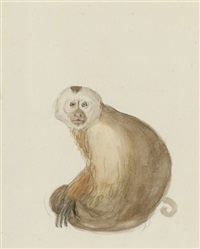 the white-headed capuchin monkey (+another; pair; study) by jean-baptiste audebert