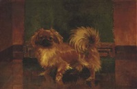 a standing pekingese by w.m. durrant
