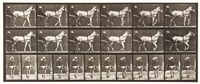 katydid, walking, sulky, light-gray mare, plate 585 (from animal locomotion) by eadweard muybridge