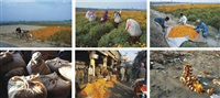 have you seen the flowers on the river (set of 6 works) by ravi agarwal