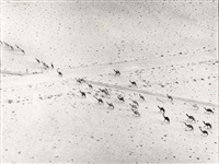kamelen (+ afrikaanse vrouw; 2 works) by sem presser
