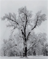 oaktree, snowstorm, yosemite national park, californie by ansel adams