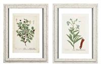 flowers (6 works) by elizabeth blackwell