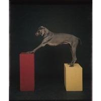 red to yellow by william wegman