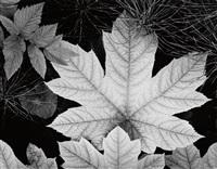 leaf, glacier bay national monument, alaska by ansel adams