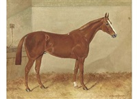 a chestnut hunter in a stable by alfred moginie bryant