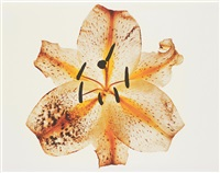 lily: melridge, new york by irving penn