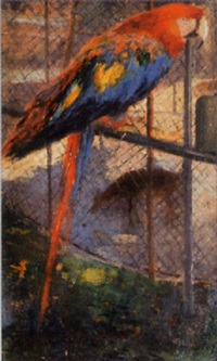 papagei im zoo by károly (karl) pongrácz von szentmiklós