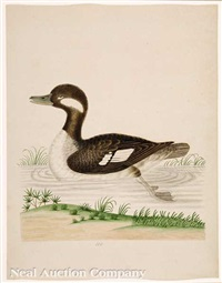 little brown and white duck by john abbot