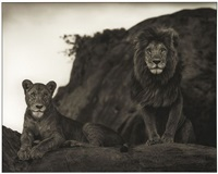 lions couple, serengeti by nick brandt