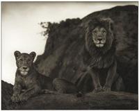 lions couple, serengeti by nick brandt