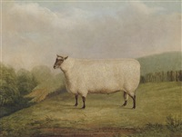 a prize ram bred by mr. william sainsbury by james (of bath) loder