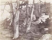 arbres et rochers, forêt de fontainebleau by eugène cuvelier