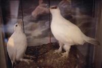 my white birds, sag harbour, n.y by nan goldin
