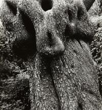 olive tree, corfu 33 by aaron siskind