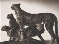 cheetah and cubs, maasai mara by nick brandt