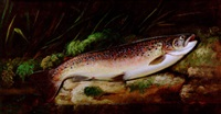 a rainbow trout on a riverbank by thomas g. targett