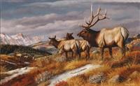 elk by gary r. swanson
