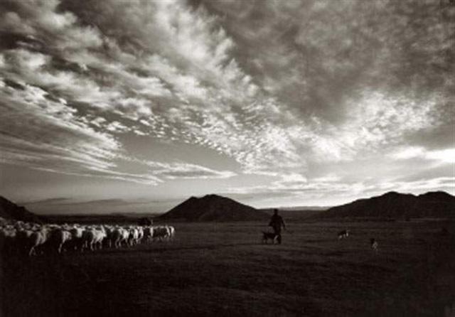 sheep near huesca spain by evelyn hofer