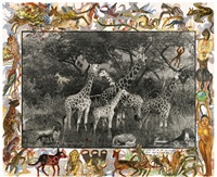 rothschild's giraffes by peter beard