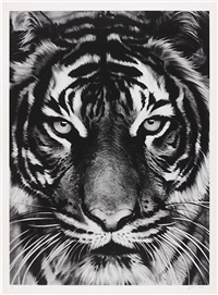 tiger by robert longo