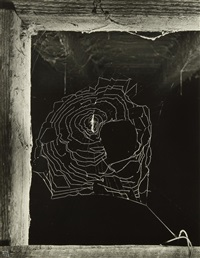 spider web in stables (toile d'araignée dans les écuries). paris by ilse bing