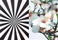 extacy almond blossom (diptych) by mustafa hulusi