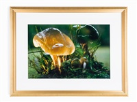 untitled (mushroom) by peter fischli and david weiss