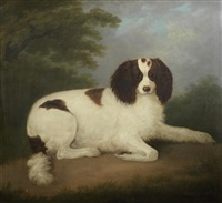 a liver and white spaniel by john nost sartorius