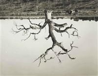 untitled by rodney graham