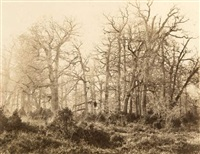 arbres (study) by eugène cuvelier