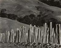 fence, old road, big sur by edward weston