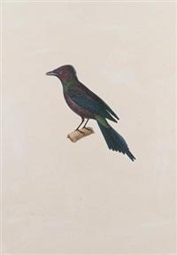 a starling by jean gabriel prêtre