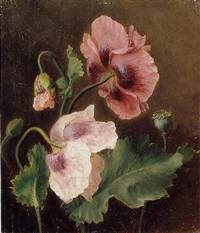 a study of flowers by adèle riché