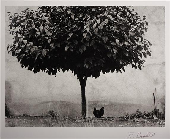 la poule e larbre france by edouard boubat