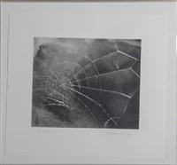 spiderweb, for lincoln center/list art program by vija celmins