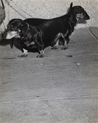riverside drive nr 100th street, (dachshunds) ca.1940 by weegee