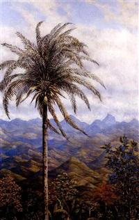 paisaje tropical by gonzalo ariza