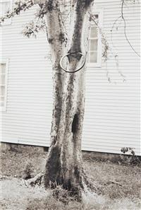 money tree (for parkett 31) by david hammons