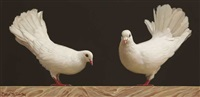 fantail pigeons by brian mccarthy