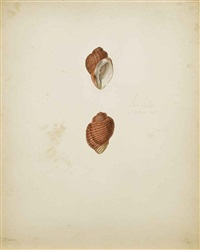 conchyliologie (various sizes; 17 works) by jean gabriel prêtre