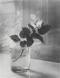 white rose in a glass by josef sudek